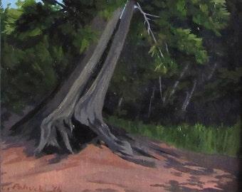 Surviving White Pine