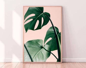 Blush Monstera Leaf Print