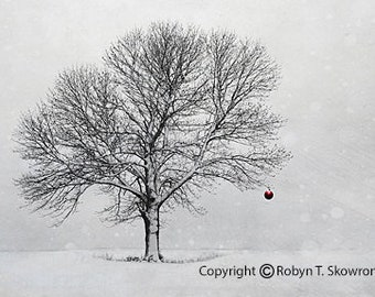 Winter Christmas Card -  - Set of 3 5x7 Fine Art Photography Note Cards