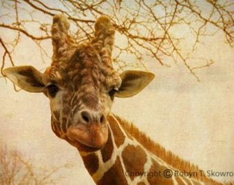 Giraffe II - 4x6 Fine Art Photograph