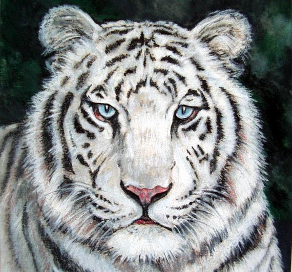 White Tiger Cat Painting Art Original 5 x 7 Colored Pencil