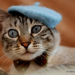 Cat French Beret - Bridesmaids Movie Original Beret - Wool Beret for Cats and Dogs - Hand Felted Beret for Pets-Birthday Gift - Holiday Gift