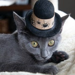 Pet Halloween Hat - Scary Spiders Cat Hat - Halloween Dog Hat