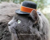 Thanksgiving Cat Hat - Spiced Pumpkin - Spiced Pumpkin - Father's Day Cat (Dog) Hat -  Festive Mini Hat