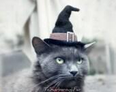 Cat Costume - Witch Hat - Hissy Witch - Cat Halloween Costume - Pet Halloween Costume - Cat Photo Prop - OOAK