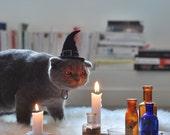 Cat Costume - Cat Witch Hat - Hissy Witch - Cat Halloween Costume - Pet Halloween Costume - Cat Photo Prop - OOAK