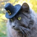 Hat for Cats Thanksgiving - Pilgrim Cat Hat - Wool Felted Pet Hat - Cat Pilgrim Costume - Pet Costume - Cat Photo Prop