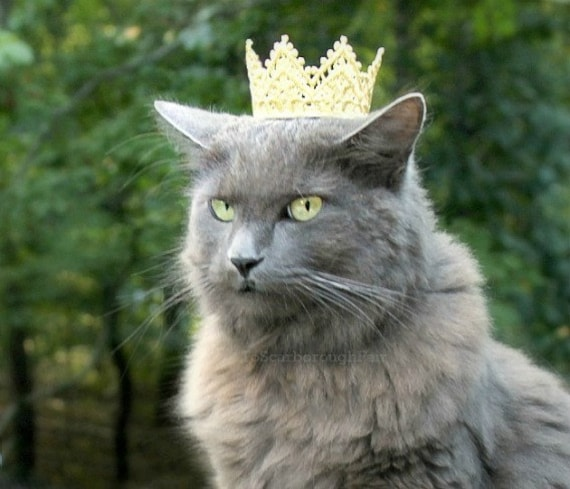 Made with USA made yarn King or Queen Crown for your cat or dog Gift for Cat or Dog owner