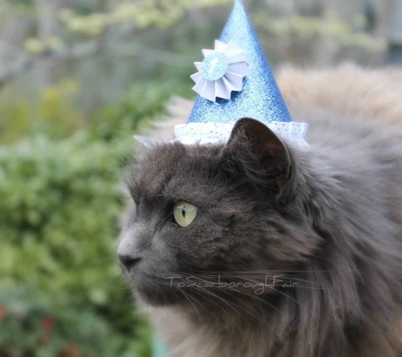 Birthday Cat Hat Celebration Pet