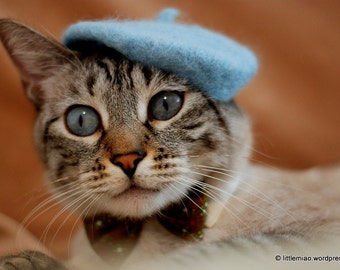 Cat Beret - Bridesmaids Movie Original Beret-Light Blue -Wool Beret Cats and Dogs-Hand Felted Beret for Pets-Birthday Gift - Holiday Gift