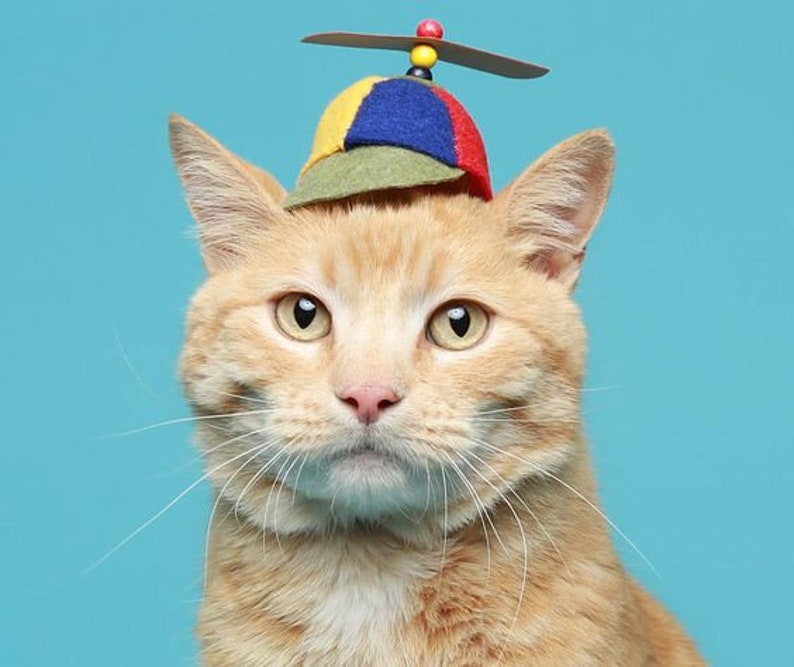 The Helicopter Cat Hat | Stay at Home Mum