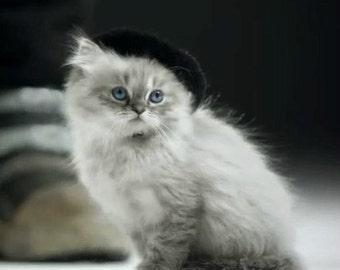 Cat Beret - Hand Felted Wool Pet Beret - French Puss - Dog Beret - Chihuahua Beret