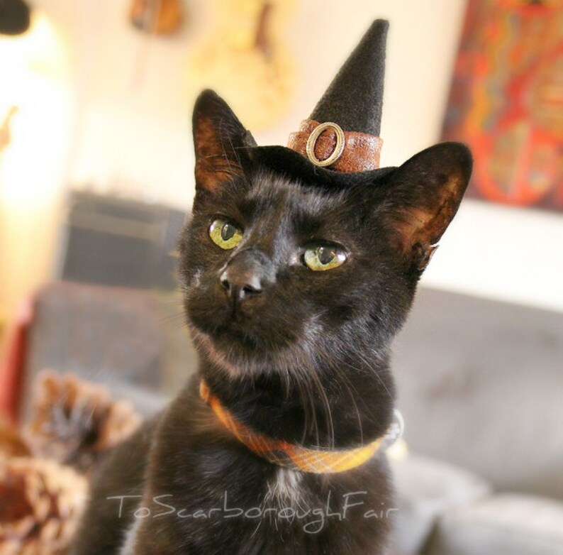Cat Halloween Costume   Witch Cat Hat   Cat Costume   Pet Costume Good  Witch   Pet Halloween Costume   Eco Friendly