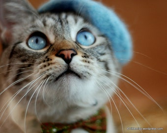 Cat French Beret - Wool Beret for Cats and Dogs - Hand Felted Beret for Pets