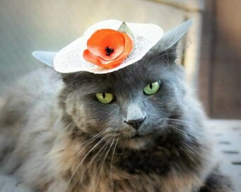 Original Design - Sky Blue Mini Hat -Cat Hat - Easter Bonnet - Spring Cat Hat - Elsa Hat for Pet - Winter Kingdom - Cat Costume - Photo prop