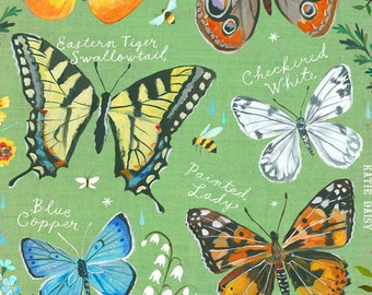 Butterfly ID Chart | Nature Decor | painting | Katie Daisy