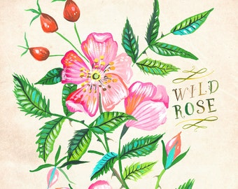 Wild Rose print | Katie Daisy Art | Watercolor Floral | Wall art | 8x10 | 11x14