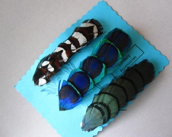 3 Feather Barrettes- Peacock, Reeves, and Lady AM