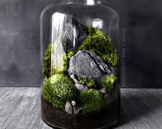 Indoor Moss Garden Multilevel Recycled Glass Terrarium