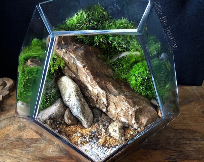 Geometric Planted Terrarium Pentagon 2 Sizes