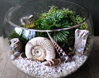 Genuine Ammonite Fossil Terrarium Display with Live Moss
