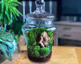 Large Apothecary Jar Terrarium with Live Moss Plants