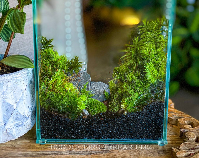 Planted Terrarium Display Box