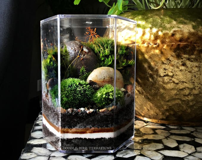 Desktop Landscape Terrarium in Geometric Hexagon Jar