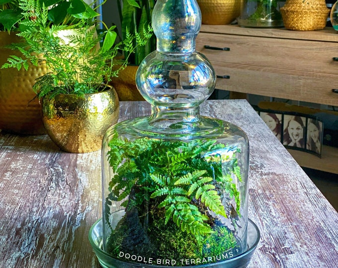 XL Bohemian Moroccan Glass Plant Terrarium with Brass Finial and Live Kokedama