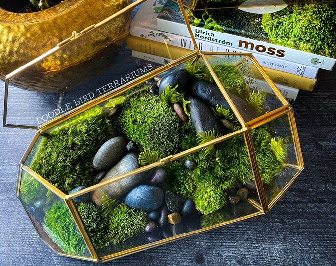 Large Geometric Moss Terrarium Case