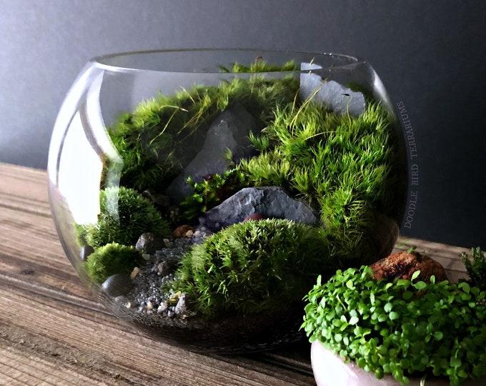 Small Bio-Bowl Planted Moss Urban Jungle Terrarium