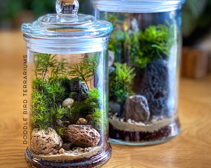 Small Moss Terrarium in Glass Jar - 2 Sizes