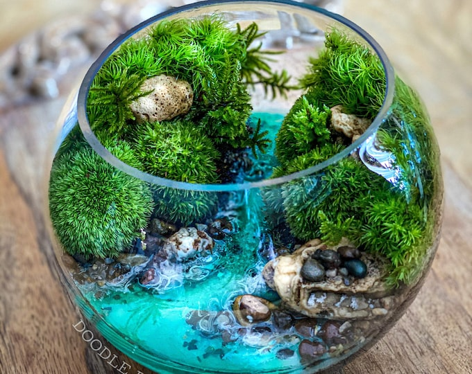 Tropical Terrarium Blue Springs Mangrove