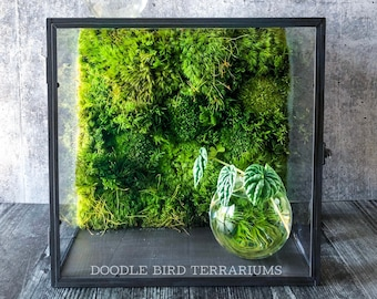 Moss Wall Terrarium - Tabletop or Hanging Shelf