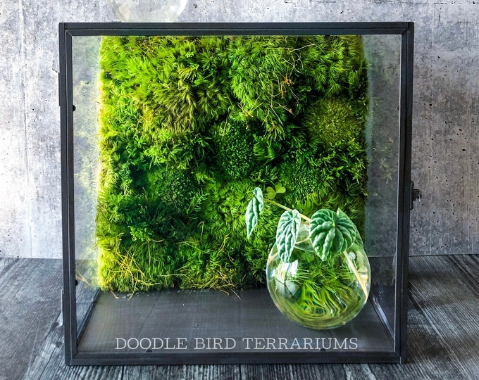 Modern Decor Moss Wall Terrarium - Tabletop or Hanging Shelf
