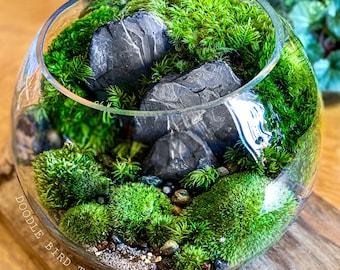 Large Bio-Bowl Terrarium with Organic Woodland Plants - 2 Sizes
