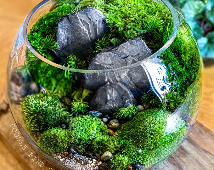 Large Bio-Bowl Terrarium with Organic Woodland Plants