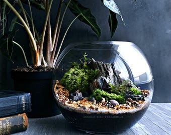 Custom Living Landscape Terrarium with Petrified Wood Specimen and Live Plants