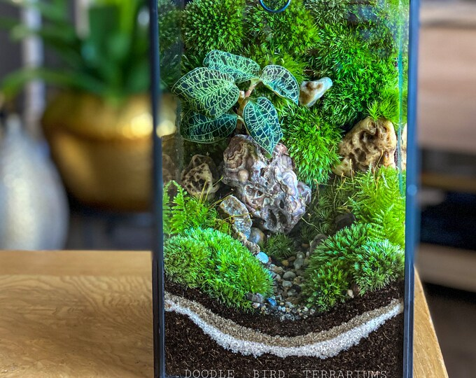 Planted Terrarium Case with optional Jewel Orchid