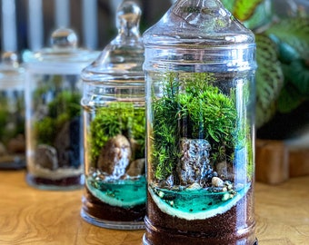 Tropical Waterfall Terrarium - 2 Sizes