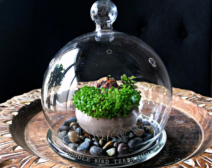 Miniature Japanese Wabi Kusa Garden Kit with Bell Jar