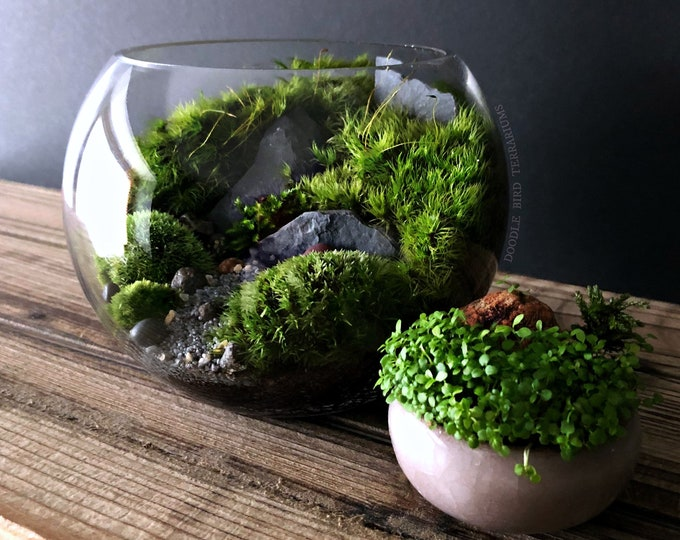 Small Bio-Bowl Planted Moss Urban Jungle Terrarium