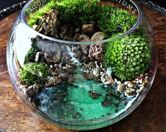 Ocean Scene Bowl Terrarium with Live Plants