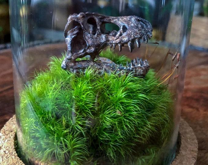 T-Rex Skull Replica Display Terrarium Gift Set