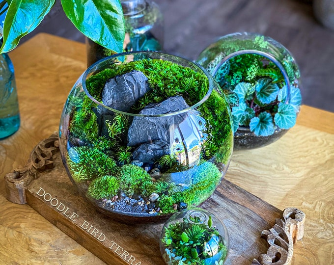 Large Bio-Bowl Terrarium with Organic Woodland Plants