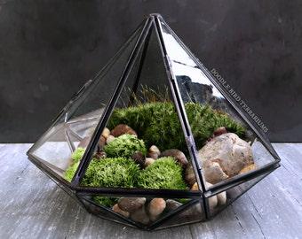 Geometric Glass Diamond Terrarium with Plants
