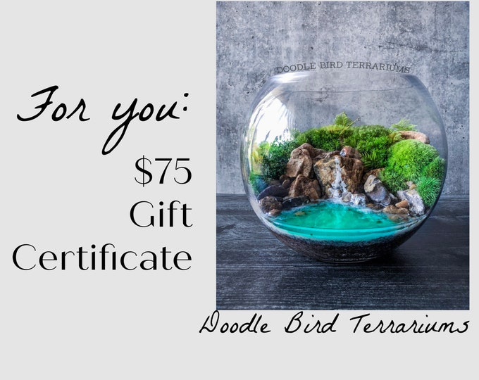 75 Dollar Gift Certificate to Doodle Bird Terrariums