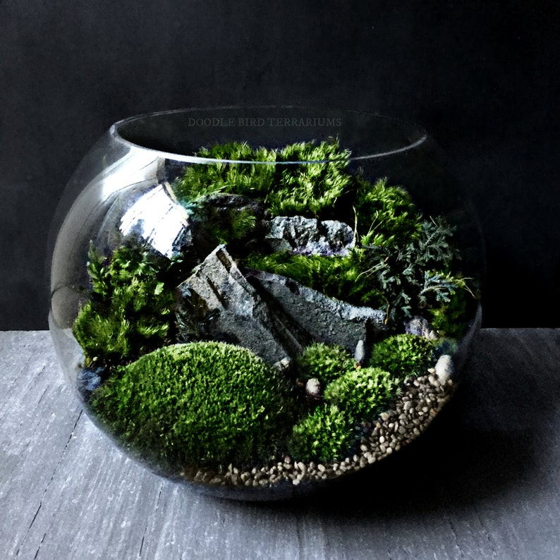 Large Bio Bowl Terrarium With Organic Woodland Plants Etsy
