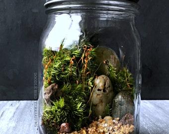 Woodland Terrarium Kit in Glass Mason Jar