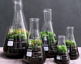 Science Flask Terrarium Set